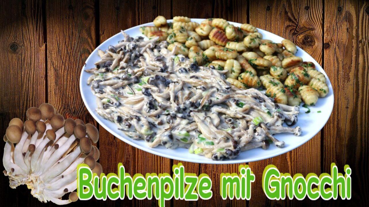 Buchenpilz, Buchenpilze, Shimeji, Rezept, zubereiten, braten, Pilze, Pilzpfanne, Gnocchi